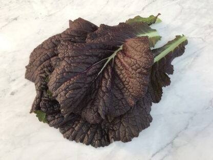 Japanese Red Giant Mustard Greens
